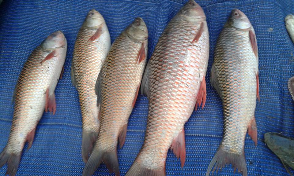 Make sure from where you buy fish in Pakistan